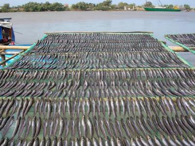 Các phương pháp sấy hải sản hiệu quả cao